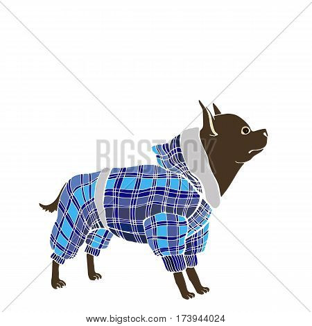 vector dog clothes funny little blue rock
