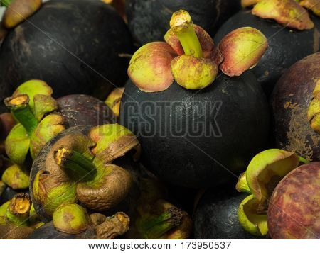 The purple mangosteen (Garcinia mangostana) colloquially known simply as mangosteen is a tropical evergreen tree believed to have originated in the Sunda Islands and the Moluccas of Indonesia. It grows mainly in Southeast Asia and also in tropical South A