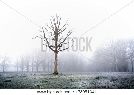 Weird tree in frozen meadow over exposed to express it's appearance