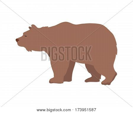 Brown bear flat style vector. Wild and dangerous omnivorous animal. Northern fauna species. For nature concepts, children s books illustrating, printing materials. Isolated on white background