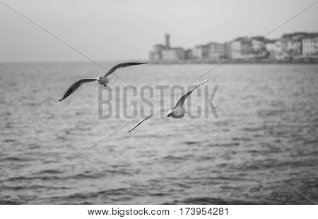 Seagulls are flying above sea level over the mediterranean sea.
