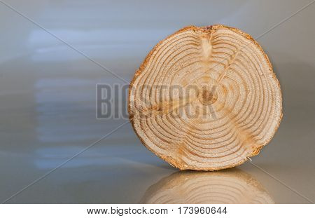 One transverse unpolished pine saw cut with annual rings and twigs stands on light glossy surface.