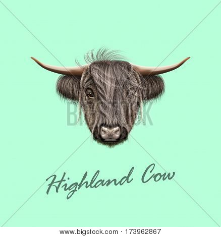 Vector Illustrated portrait of Highland cattle. Cute head of Scottish cattle on blue background.
