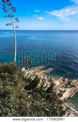 View of the coast of Sanremo with blue sea, agave and succulent plants, Italy