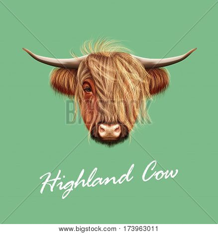 Vector Illustrated portrait of Highland cattle. Cute head of Scottish cattle on green background.