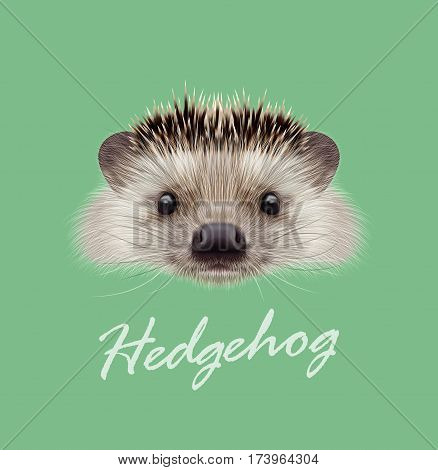 Vector Illustrated portrait of Hedgehog. Cute head of wild spiny mammal on green background.
