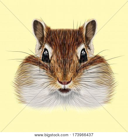 Illustrated portrait of Chipmunk. Cute head of wild mammal on yellow background.