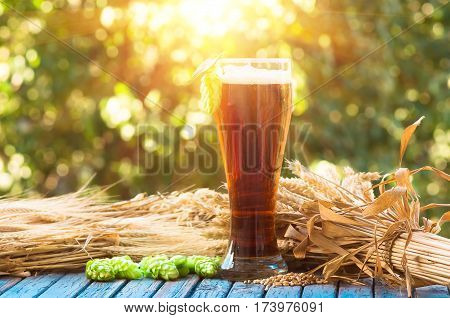 dark beer in a glassmalt barley ears and cone hop. natural background alcohol
