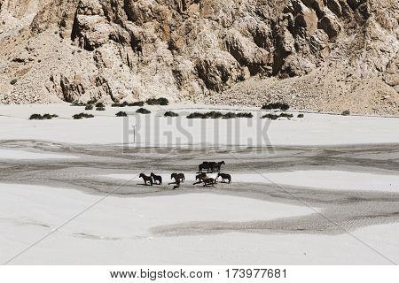 Horses India Rocky Terrain