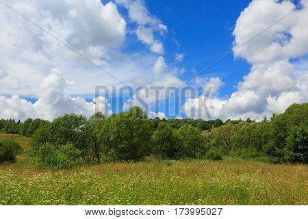 Flowering grassy meadow under blue cloudy sky in Bieszczady, Bieszczady, Podkarpacie, Poland, Europe