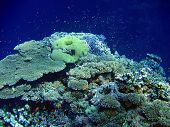 Underwater landscape with many small fish and coral poster