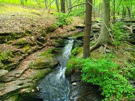 Stream Through Nature