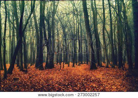 Deep Into The Fogy Autumn Dark Forest