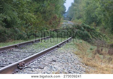 Trees Across A Railroad Line After Hurricane Florence Near Fayetteville North Carolina