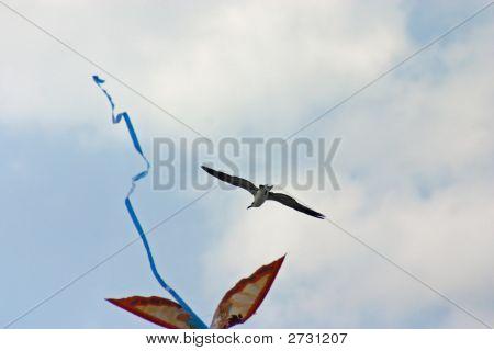 Bird And Kite