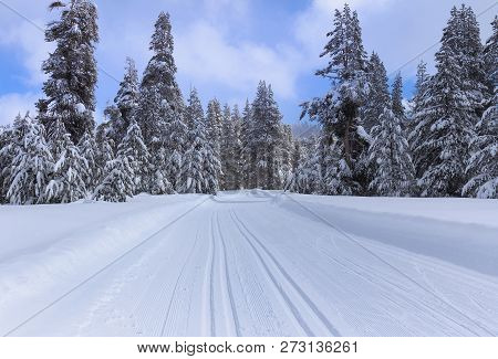 Winter Landscape With Ski Trail In Snowy Forest.
