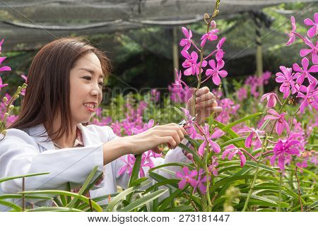 Researcher Botanical Research Orchid Wearing A White Cap And Cutting Orchid Flower To Research In Th