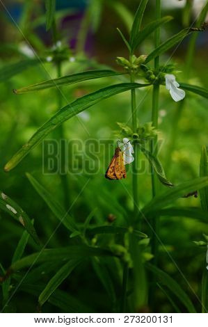 Butterfly Insect In Nature. Nature Insect Butterfly On Pink Flower Plant. Butterfly In Nature. Butte