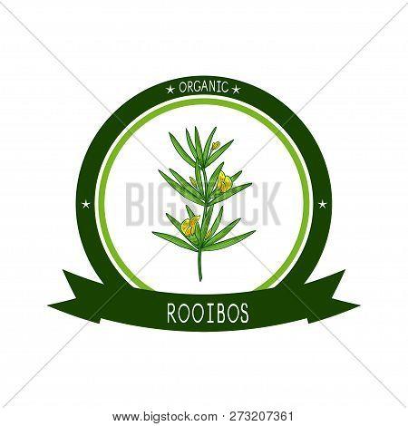 Rooibos. Leaves, Flower. Sketch. Color. Logo, Emblem.