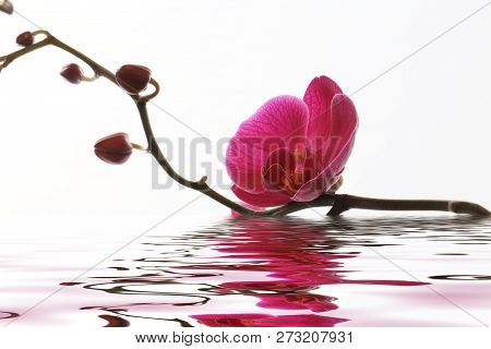 Pink Orchid Flower Background Reflected In Water