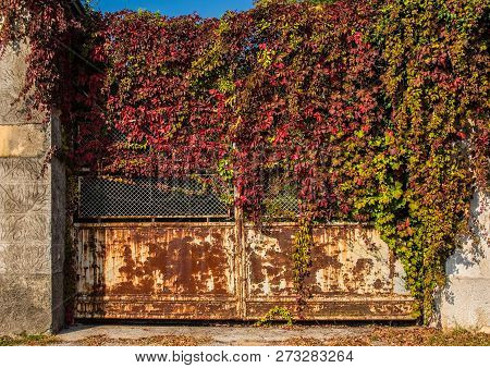 A Creeper Grows Over A Disused Rusted Metal Gate By A Derelict Building In North East Italy