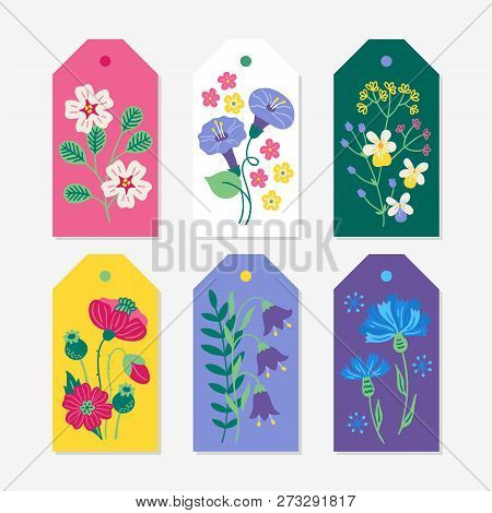 Six Summer Gift Tags With Viola, Poppies, Bellflowers, Cornflowers, Bindweed, Fiels Flowers. Perfect