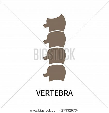 Vertebra Icon Isolated On White Background. Vertebra Icon Simple Sign. Vertebra Icon Trendy And Mode