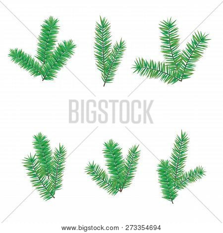 Green Branchesfir Tree For Merry Christmas Or Happy New Year Decoration. Branches Evergreen Conifer,