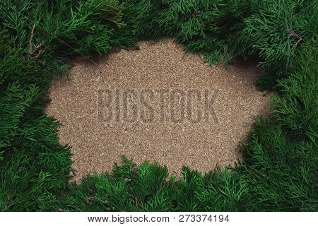 Frame Of Conifer Branches On A Cork Board. Christmas Background.