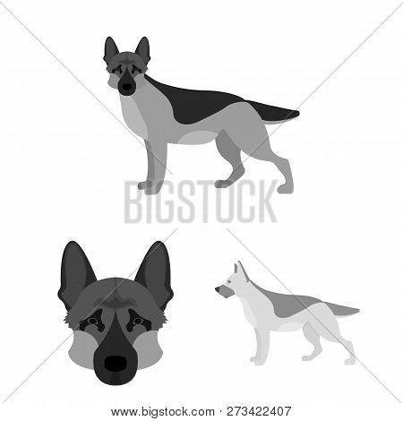 Vector Illustration Of  And Sheepdog Logo. Collection Of  And German Vector Icon For Stock.