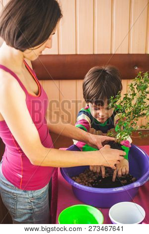 Replanting Home Flowers. The Boy Helps His Mother To Plant Plants In A Pot. A Child Learns To Care F
