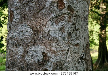 Close Up Of Worm Patterns On A Trees Trunk In The Jungles Of Cambodia