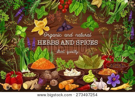 Cooking Spices Seasonings And Culinary Herbs Flavorings. Vector Organic Natural Onion, Tomato Or Bay