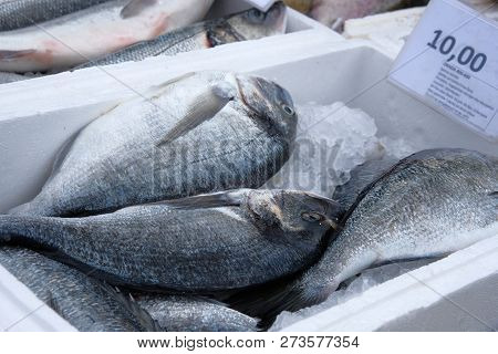 Fresh gilt-head bream at fish market. Dorada. poster