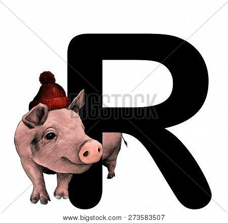 Christmas Pig In Warm Hat With Pompom Peeps Out From Behind The Letter R Part Of The Word Christmas,