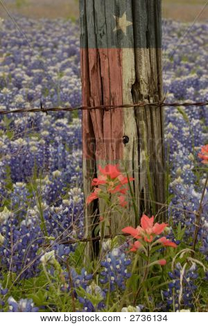 Lone Star Flag And Bluebonnets