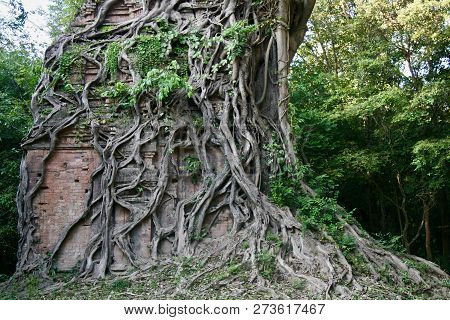 Huge Old Banyan Tree Engulfing Old Brick Structure In The Jungles Of Cambodia