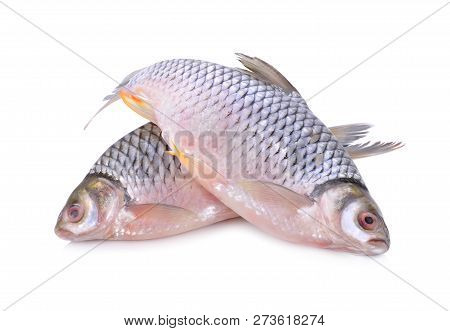 Whole Round Silver Barb Fish On White Background