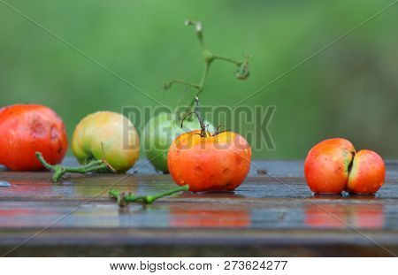 Colorful wet tomatoes on wet bench