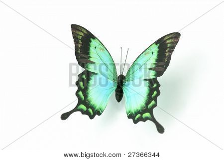 Closeup of butterfly,Isolated on White