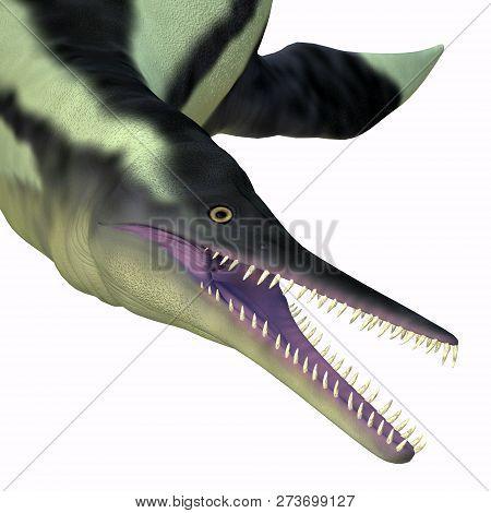 Dolichorhynchops Plesiosaur Head 3d Illustration - Dolichorhynchops Was A Carnivorous Reptile Plesio