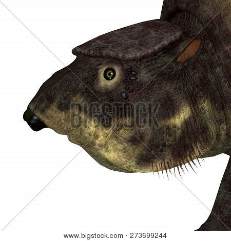 Glyptodont Mammal Head 3d Illustration - Glyptodont Was A Herbivorous Mammal That Lived In North Ame