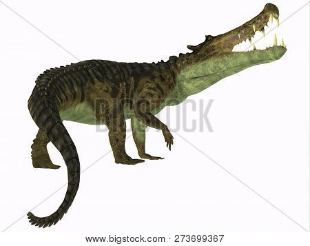 Kaprosuchus Reptile Tail 3d Illustration - Kaprosuchus Was A Carnivorous Crocodile That Lived In Nig