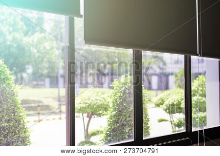 Green View Beside Window In Office, Flare Light Through The Window In The Morning, Relaxing Time, Qu