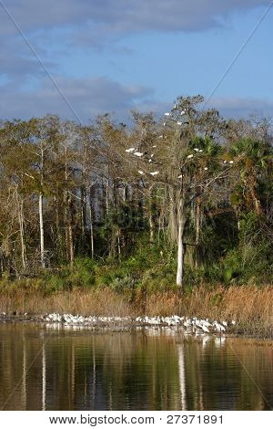 Everglades Bird Life