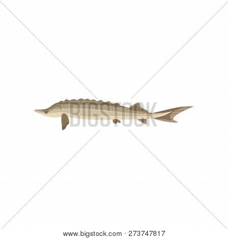 Detailed Flat Vector Icon Of Swimming Sturgeon, Side View. Marine Animal. Healthy Nutrition. Seafood