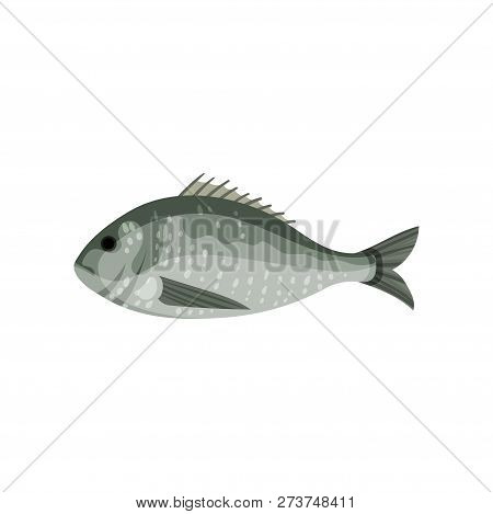 Detailed Flat Vector Icon Of Sea Bream, Side View. Fish With Small Fins. Marine Animal. Seafood Them