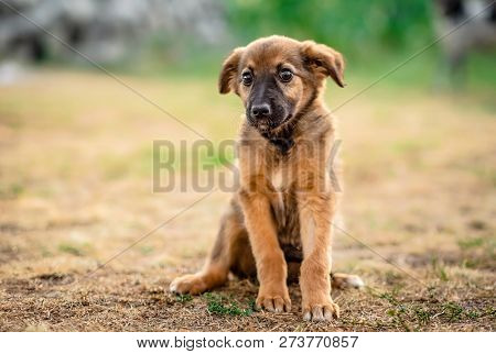 Little cute light brown homeless puppy obediently waiting poster