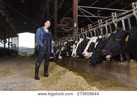 Woman Farmer Working On A Cow Farm
