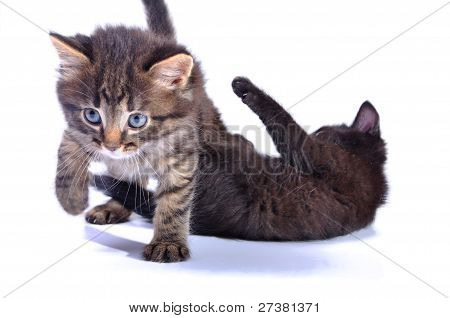 close-up portrait of two black kittens playing together poster